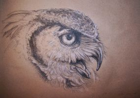 Bubo on brown by Concini