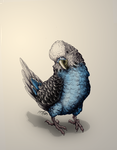 Ink Drawing - Budgie in Blue by Royal-Serpent