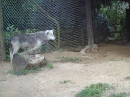Colchester Zoo photos 13 by pan77155