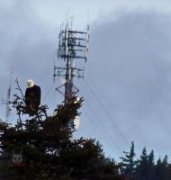 Eagle Next To Transmitter by wolfwings1