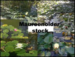 STOCK photo water lillies by MaureenOlder