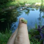 Little Frog! by shomermamillailah