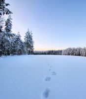 traces in snow by KariLiimatainen