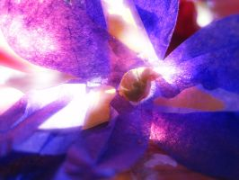 Tissue Paper Iris by Miss-Fortunate-Kitty