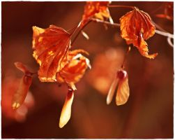wilted leaves 1 by wildtea