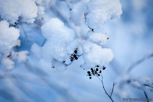 First snow - IV by crelight
