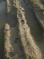 Little Footprints In The Mud by tlws