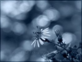 """""""Ugly"""" with bokeh in blue by WaitingForTheWorms"""