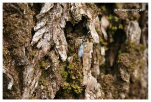 Insect's life by milagros23