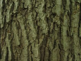 148.  Tree Bark by mynti-stock