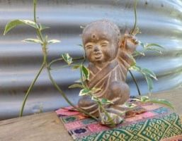 Baby Buddha caught in the Vine of Temptation. by Eccentric17