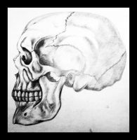 skull drawing by eyadz