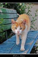 Cat 3 by WorldInPictures