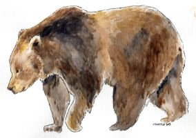 Brown bear MORPHOLOGY by VickyTico