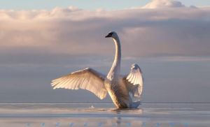 SWAN LAKE by scifilicious