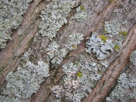 Lichens Likely by ChaoticUmbra