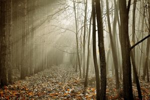 One day in the woods by tomsumartin