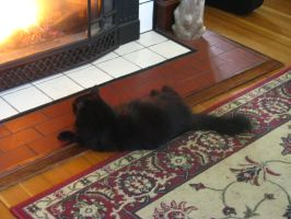 My kitty Iris, and our gas fire-place by HawkFeatherwarriors