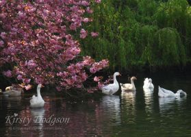 Swimming together by Kirsty2010dodgs