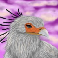 Secretary Bird by FelonDog