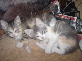 JC and Libby: 2 new kittens by Nulizz