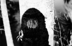 Ive got a hole in my shadow by corvid