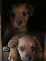 Puppies by D.D. by Mojito24