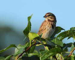 October Morning Sparrow by natureguy