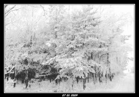 04 Black and white winter 2008 by Darkeye-Delilah