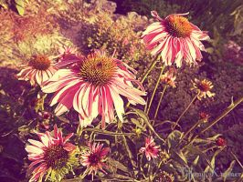 Flowers by Jeyre