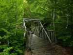 Bridge to nature by Alimba