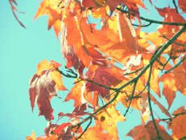 `Autumn by JohnstonColleen