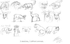 Sketch Dump 5 Diffrent Animal Sketches A Day! by Foxbat-Sullavin