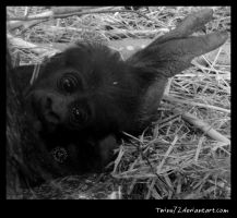 Gorilla Baby by Twins72