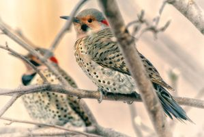 Flickers by clippercarrillo