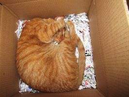 cat in a box by misducky
