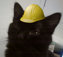 Hard hat kitten by RequestAnswered