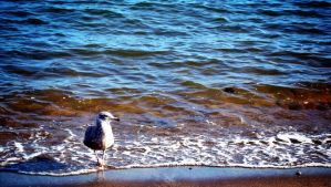 Seagull by Marissa1997