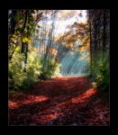 Sun Beams on the Path by Christinayoder