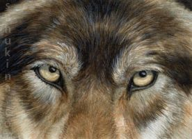 ACEO Wolf, eyes. by sschukina