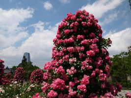 JAPAN STOCK FLOWER PLANT NO:040030008 by hirolus