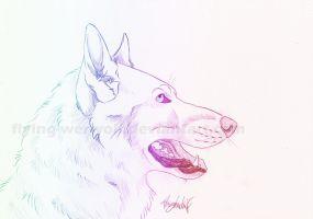 A wolfs head by NathalieNova
