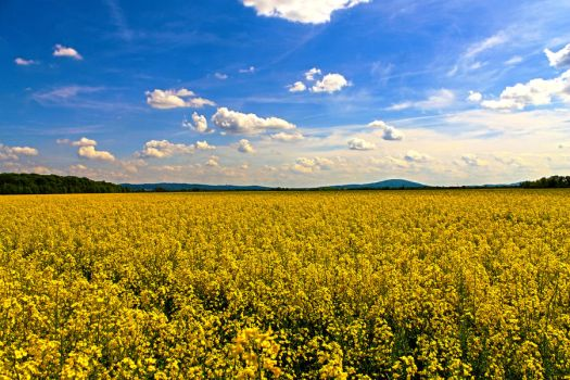 YellowLand by Gukol
