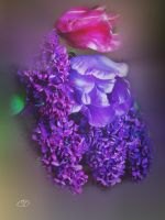 LILAS ET TULIPES  (PRINTEMPS 2013 11) by BELLESYMPHORINE