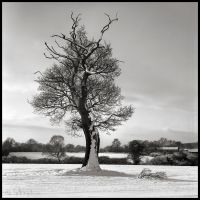 Snow Tree by Talkingdrum