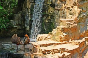 baboons kingdom by worldpitou