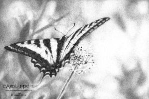 The Butterfly - Color Pencil Kit 2 by Carol-Moore