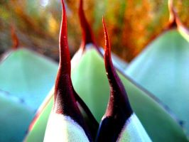 Agave by PonderosaPower