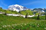 Mt. Rainier by yo13dawg