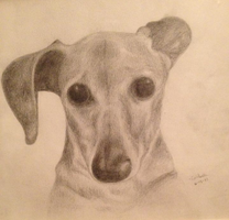 Boby the Dog by CatAleah